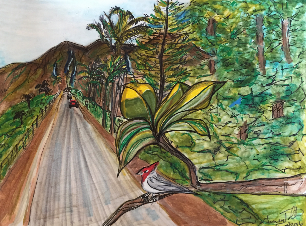 """Sketch entitled, """"After the rain.""""  Kauai 2016"""